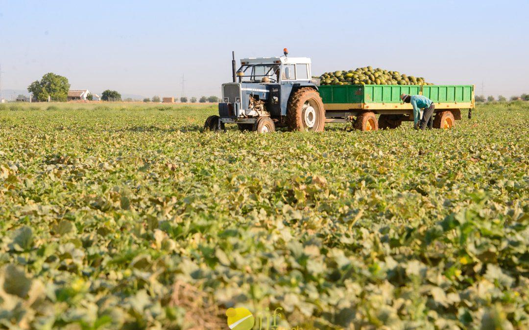 Retorno al comienzo. Un nuevo reto para Agrícola JJF